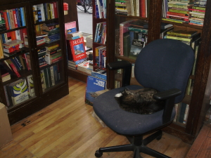 Cat snuggled up in bookstore in Montreal, Canada 2013